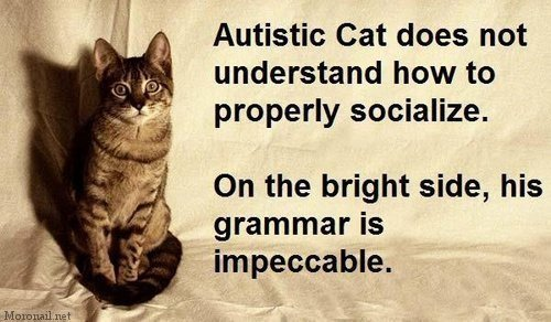 autistic-cat.jpg