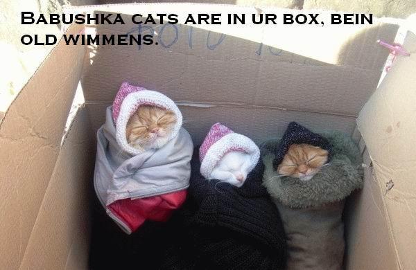 babushka-cats-bein-old-wimmen.jpg
