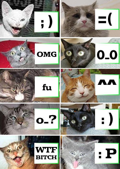 cat-smileys.jpg
