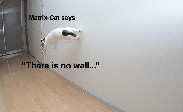 catmatrix.jpg