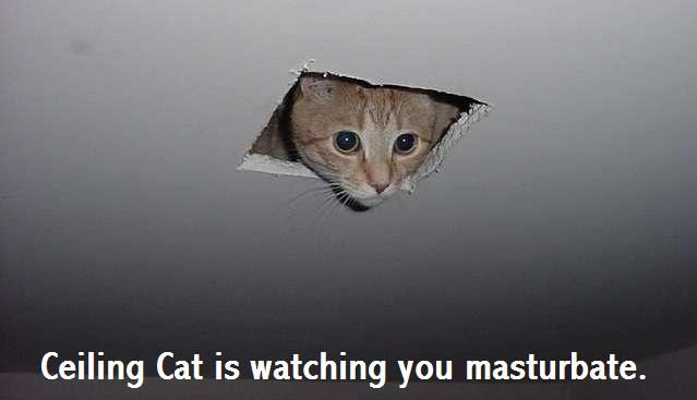 ceiling-cat-is-watching.jpg
