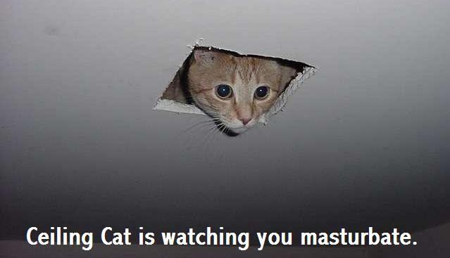 ceiling-cat-is-watching.jpg