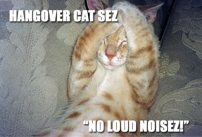 hangover-cat.jpg