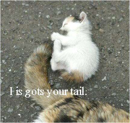 i-is-gots-your-tail.jpg