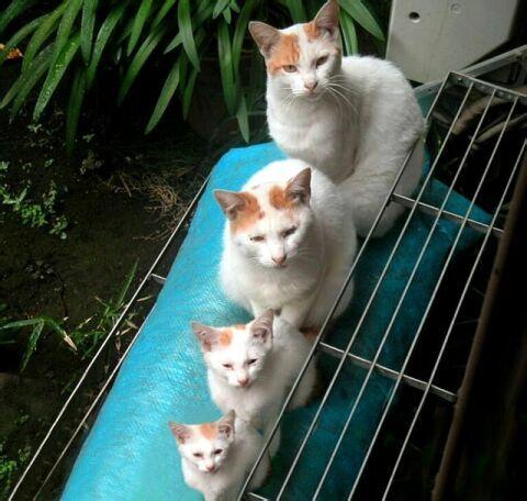 matroshka-cats.jpg