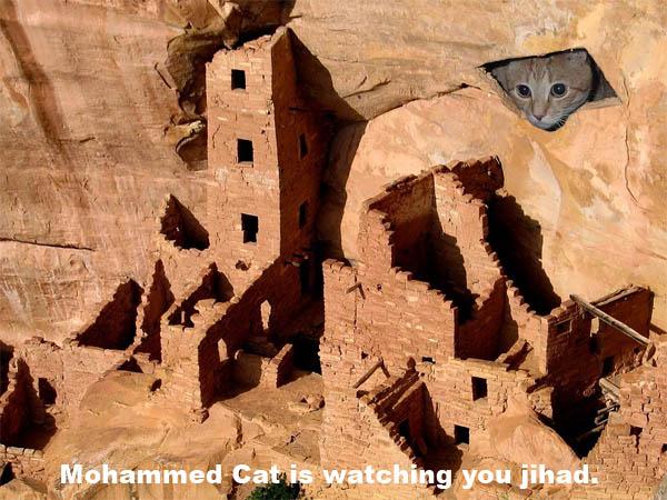 mohammed-cat.jpg