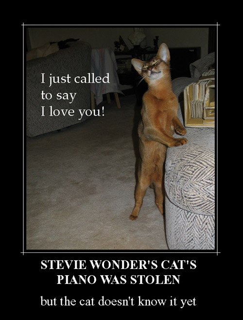stevie-wonder-s-cat.jpg