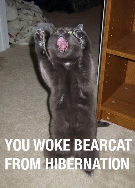 you-woke-bearcat.jpg