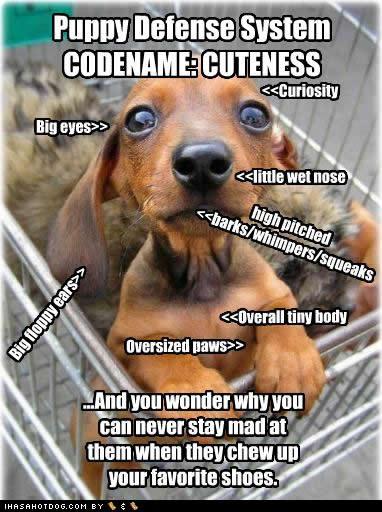 codename-cuteness.jpg