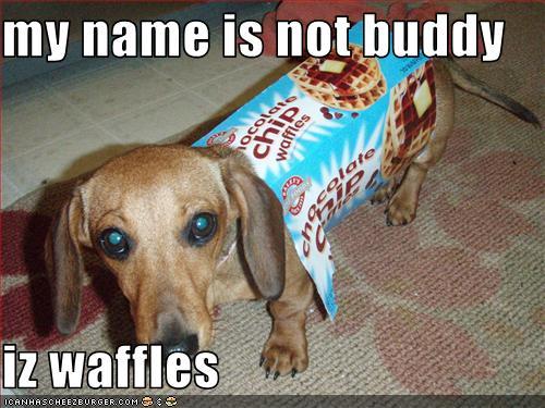 name-not-buddy-but-waffles.jpg