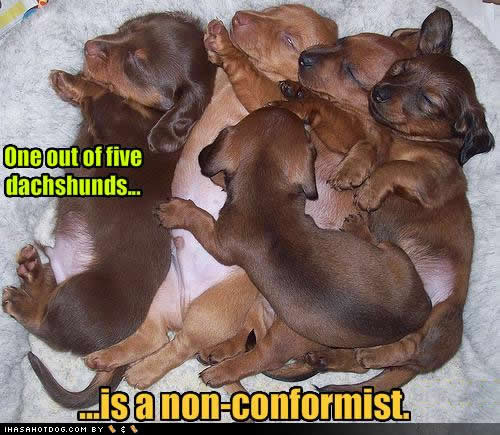 one-of-five-dachshunds-non-conformist.jpg