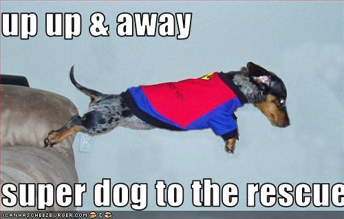 superdog-to-the-rescue.jpg