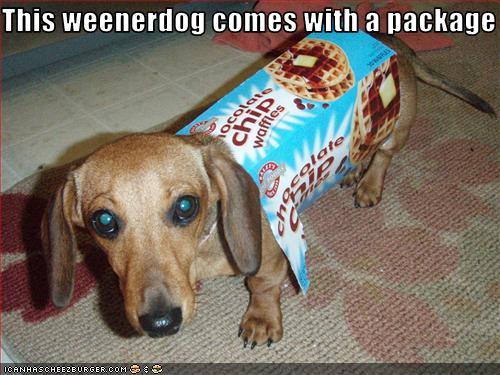 weenerdog-with-package.jpg
