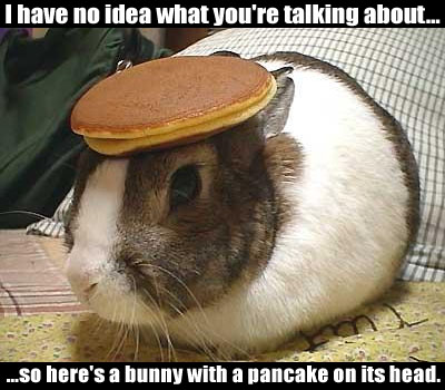 bunnywithpancakeonhead.jpg